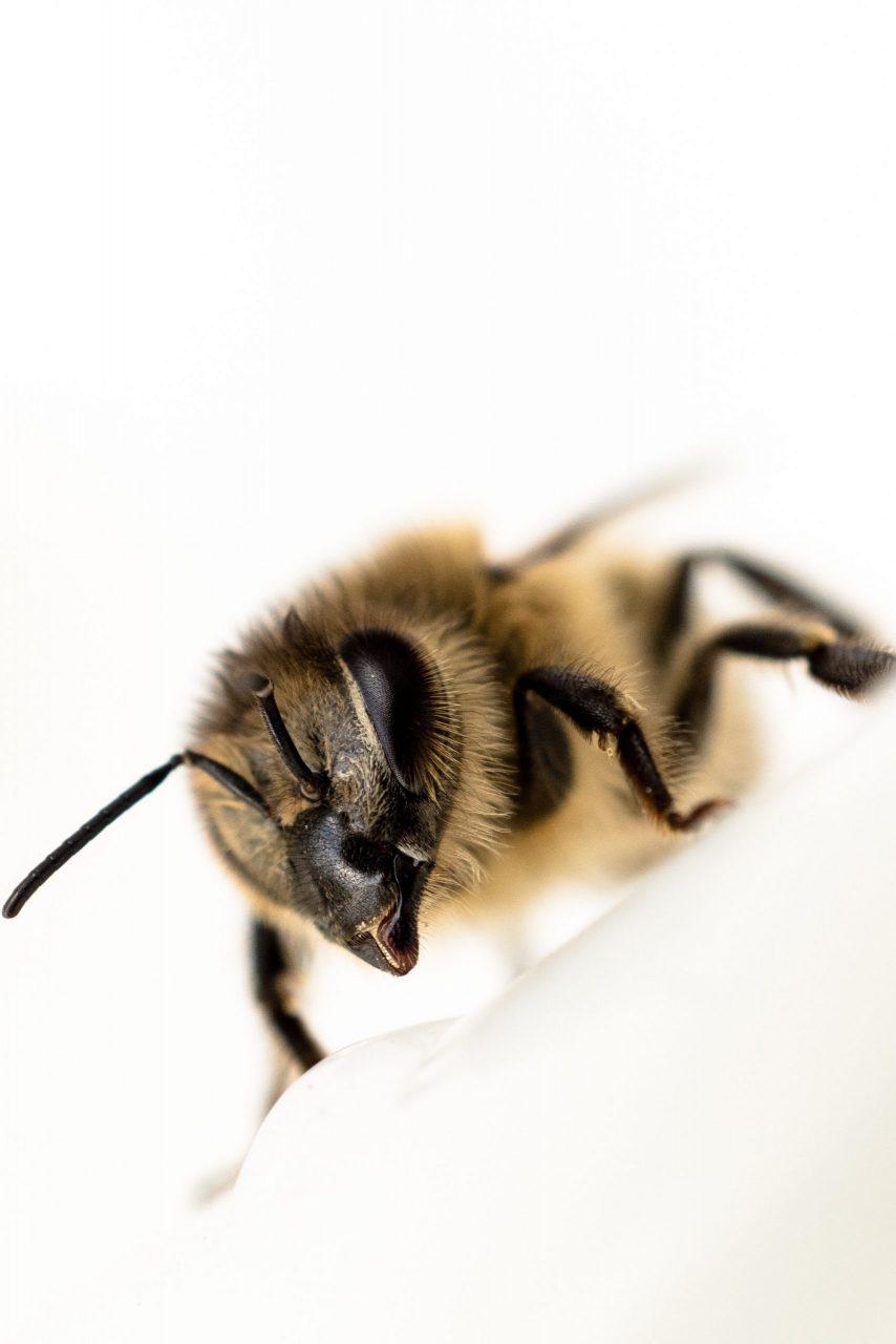 Veliki i mali pčelari